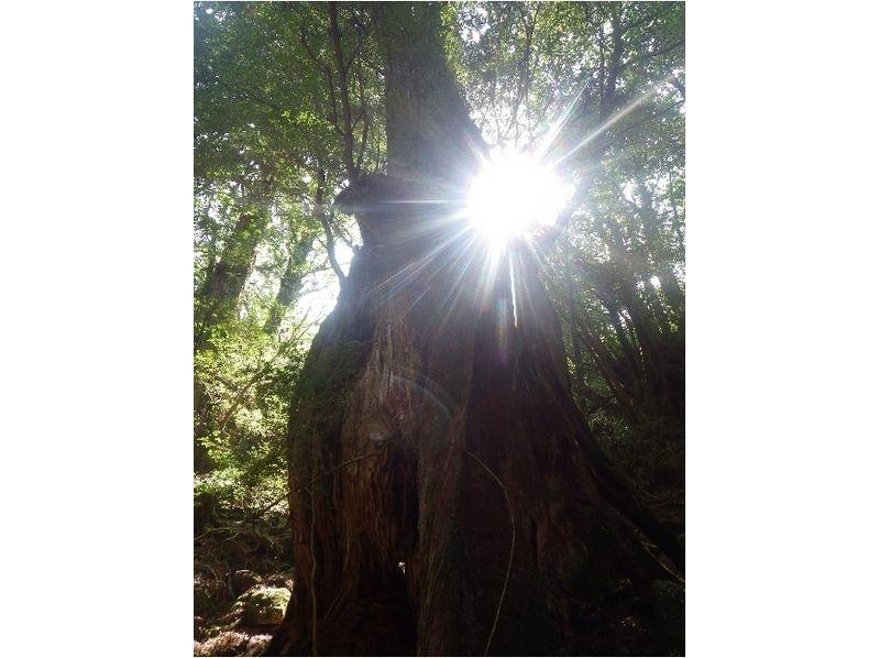【鹿児島・屋久島】苔むす森でのリラックスタイム【約7時間】の紹介画像