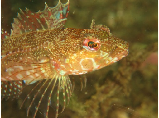 [Okayama diving] diver debut in the Seto Inland Sea! Experience 2 dive course - with lunch]の紹介画像