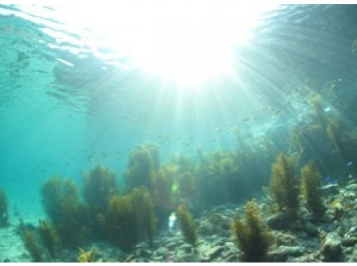 【岡山】豊かな日本海を堪能!体験ダイビング2ダイブコース【ランチ付き】の紹介画像