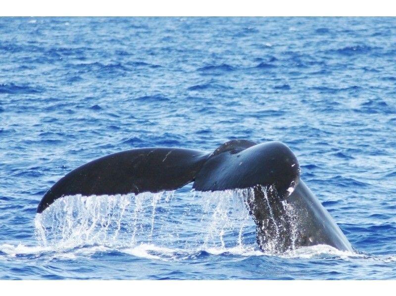 【沖縄・那覇】冬季限定!ボートチャーターで行く快適ホエールウォッチングの紹介画像