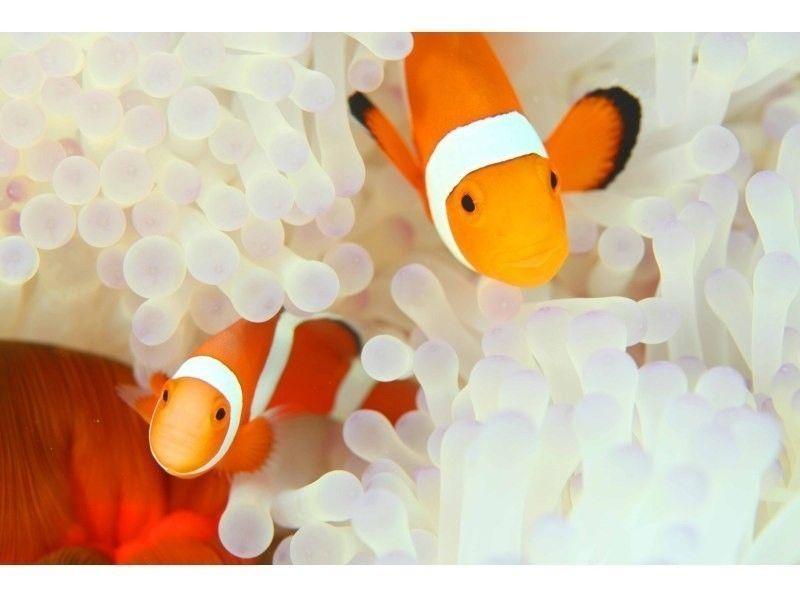 【鹿児島・奄美大島】お子様からお年寄りまで大人気!シュノーケル体験(ホワイトビーチコース)の紹介画像