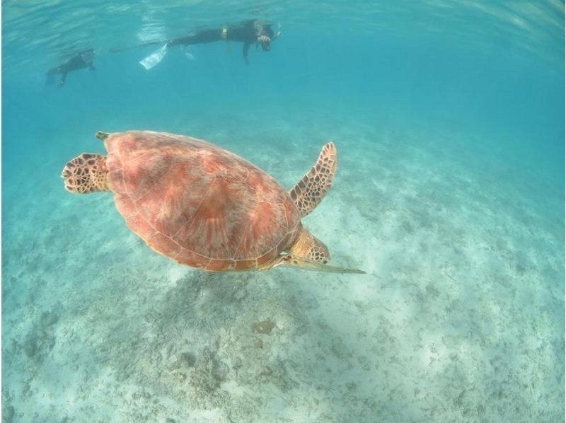 【鹿児島・奄美大島】憧れのウミガメに会いに行こう!シュノーケル体験(ウミガメ探索コース)の紹介画像