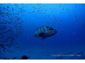 屋久島ダイビングサービス もりとうみの画像