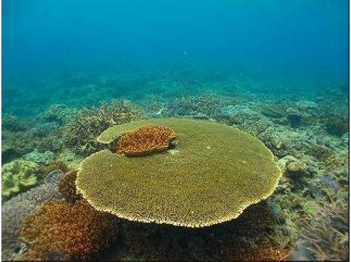【沖縄】トロピカルフィッシュやサンゴ礁の体験ダイビング