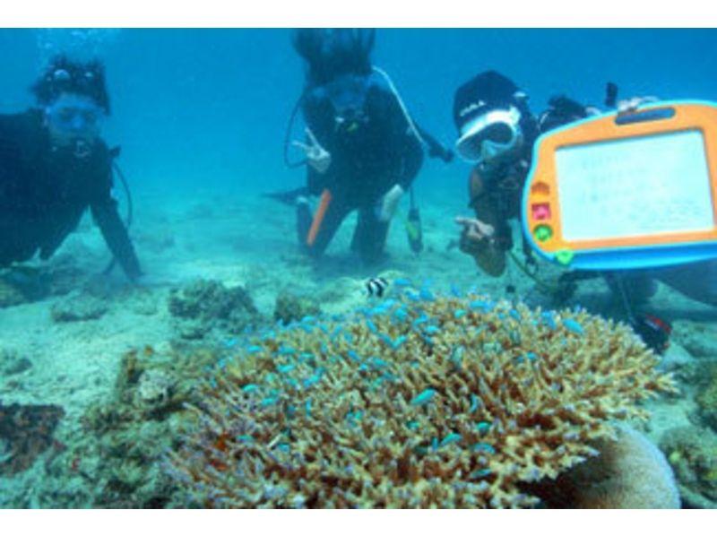 【鹿児島・奄美大島】奄美の海をたっぷり楽しむ!体験ダイビング(1日コース:7時間)の紹介画像