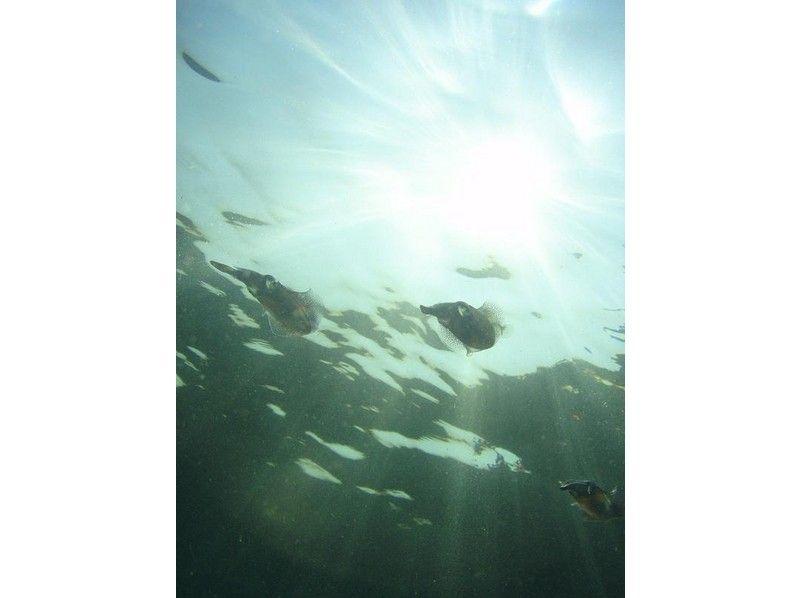 【千葉県・勝浦市 シュノーケリング】千葉の海でのんびりシュノーケリング!の紹介画像