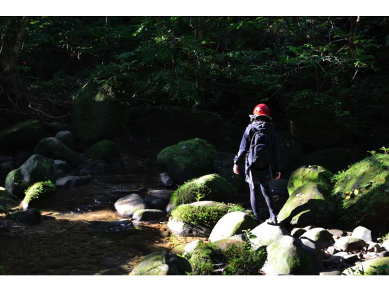 【沖縄・西表島】ユツン3段の滝!西表島トレッキングツアー(6時間)の紹介画像
