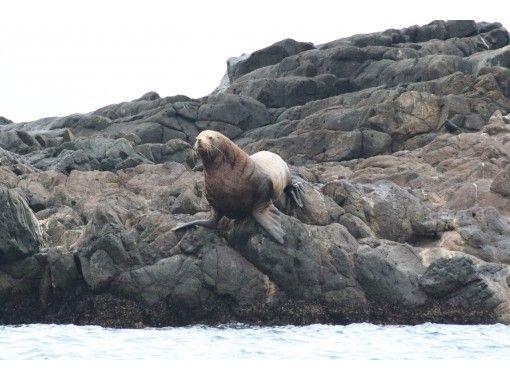 [北海道/小樽]賞春海獅&藍洞巡遊(80分鐘)即使是小孩也可以享受!の紹介画像