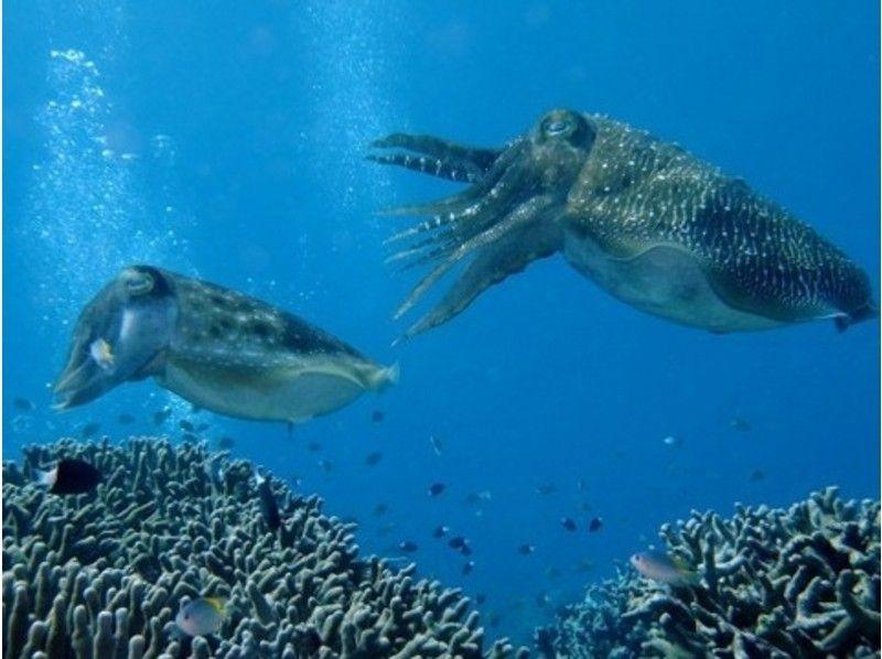 【沖縄・石垣島】1日まったり海を探検!体験ダイビング【1ダイブ/1日】の紹介画像