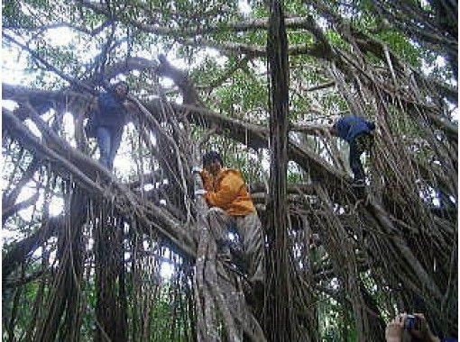 【東京・小笠原父島】ガイドが自然解説しながら森歩きツアー!ゆっくり散策したい人向け(1日コース)