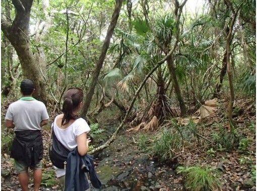 【東京・小笠原父島】ゆっくり散策したい人向け!森歩きツアー(半日コース)軽めのウォーキング!