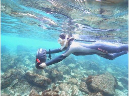 1日1組限定!【兵庫・関西】海の中の世界を知ろう!体験ダイビング~選択できる場所~(1日・温泉券付き!)の紹介画像
