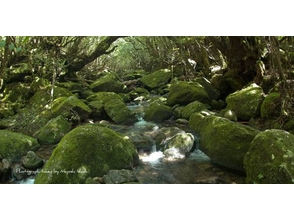 屋久島自然案内の画像
