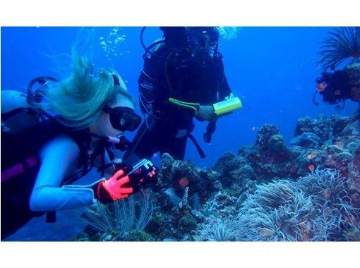 【沖縄・本島北部】絶好のポイントで体験ダイビング(半日コース)