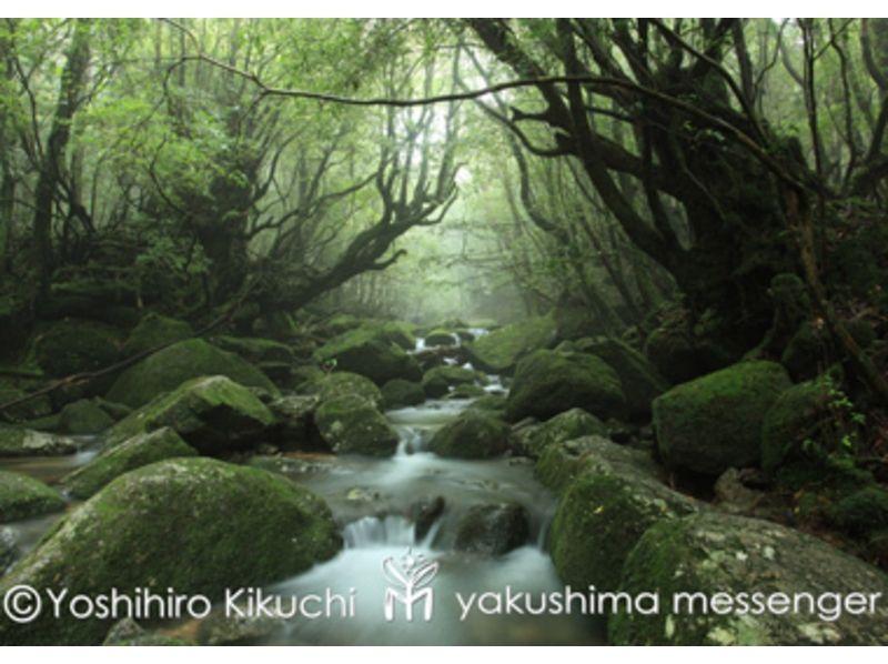 【鹿児島・屋久島】屋久島風を感じませんか?天文の森トレッキングの紹介画像