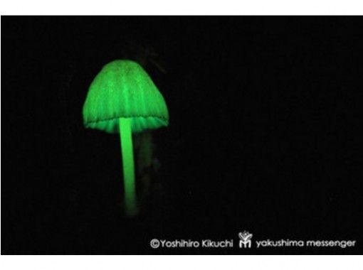 【鹿児島・屋久島】ドキドキ!闇夜の森歩き&海亀観察トレッキング