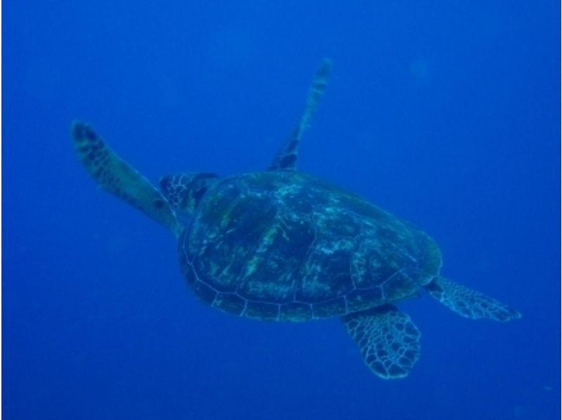 【鹿児島・屋久島】透明な海を覗き見!シュノーケリング(半日コース)の紹介画像