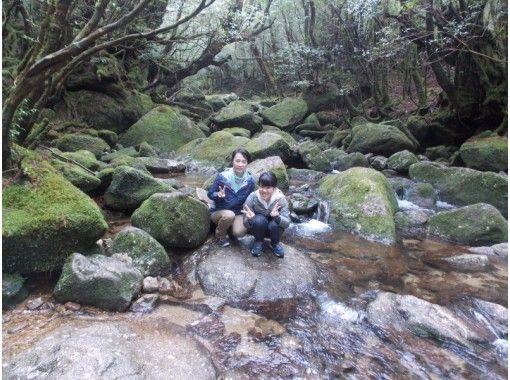 【鹿児島県・熊毛郡】  白谷雲水峡トレッキング「 苔むす森コース」初心者にオススメ!(往復約4km)