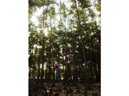 【セット】屋我地島 マングローブ散策とマングローブ染め