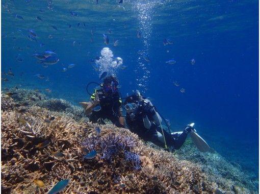 [沖縄·西表島(Iriomote Island)在礁石傳播的西表海的第一次體驗深潛【1船半天日】の紹介画像