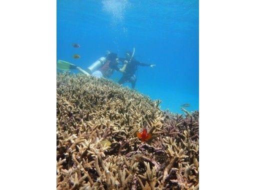 【鹿児島・奄美大島南部】ダイビングライセンス2日間講習。奄美大島海峡、加計呂麻島ヨットクルーズ