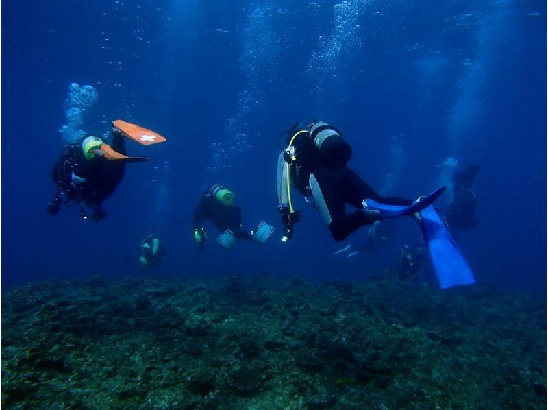 【沖縄・金武湾】恩納村エリアで気軽にビーチファンダイビングの紹介画像