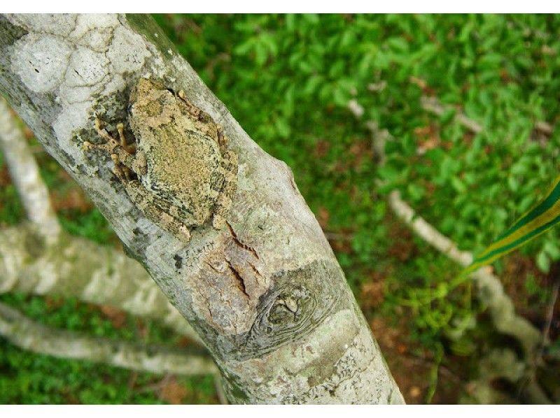 【滋賀高島】基本のツリーカフェ!枝に座って立って寝転んでとことん木登り!(2時間)の紹介画像