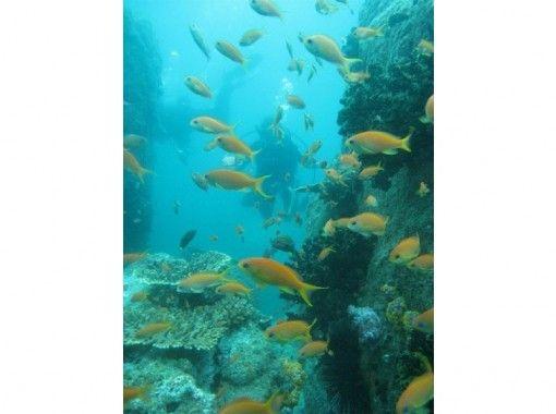 【四国・日帰り体験ダイビング】『福山・世羅発』珊瑚と熱帯魚の四国の海で、じっくり2本ダイビングの紹介画像