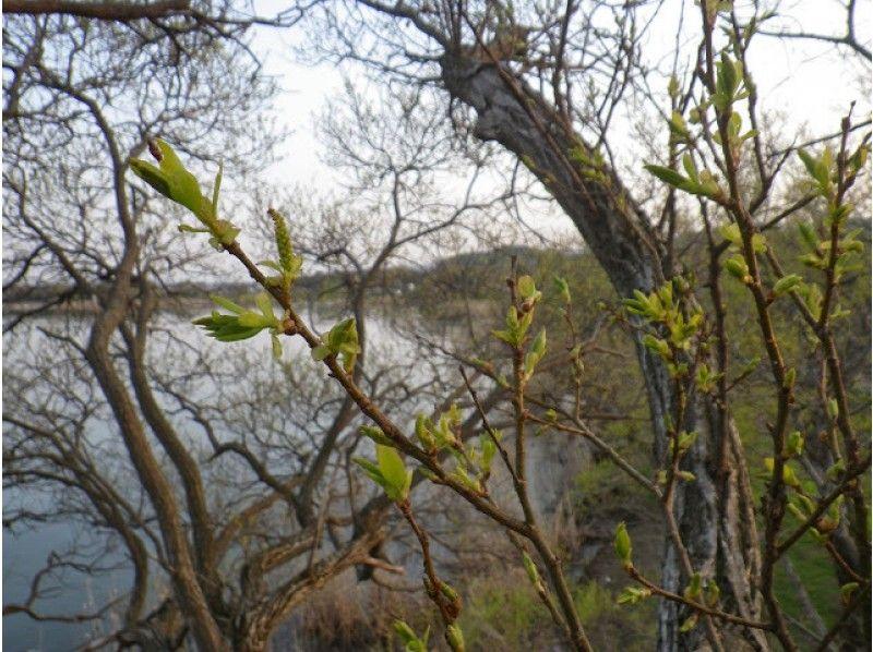 【滋賀・高島】至福のツリーカフェ!ハンモックで森の時間を満喫する木登りツアー(3時間)の紹介画像