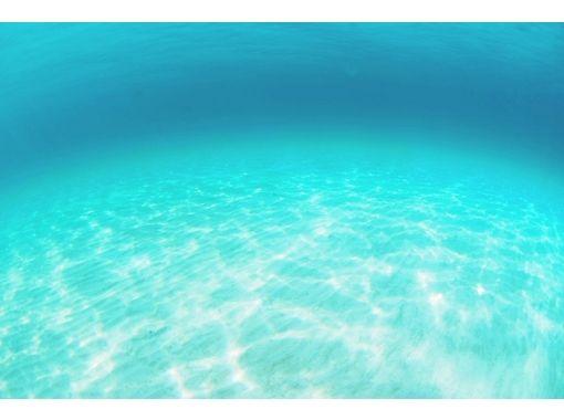 【須崎】海の水族館を満喫!ファンダイビング【1日】の紹介画像