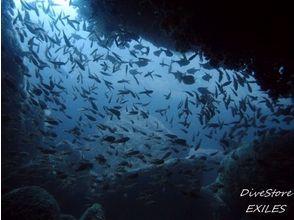 DiveStore EXILES(エグザイルス)の画像