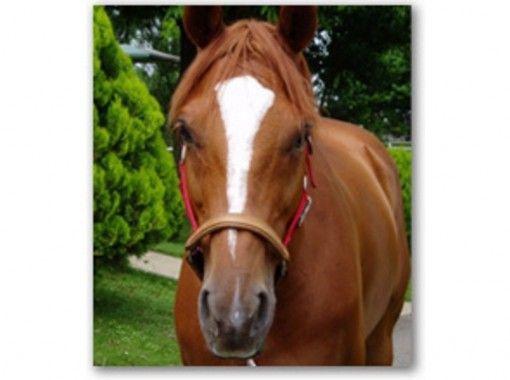 【茨城・水戸】馬にまたがってみよう!体験乗馬(1回コース)【乗馬】の紹介画像