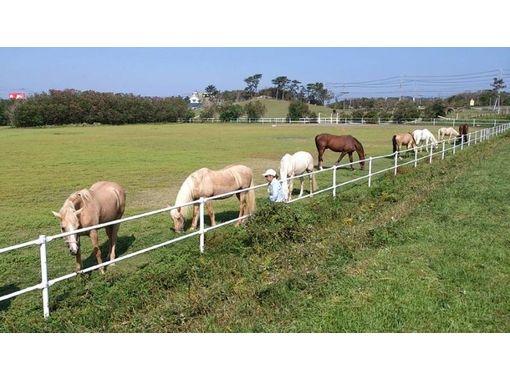 【静岡・御前崎】初めての方にお勧め!乗馬体験1回コース