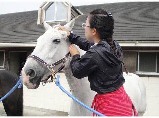 【静岡・御前崎】乗馬を始めたい方おすすめ!乗馬教室4回コース