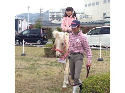 【静岡・御前崎】小学生限定!ポニースクール4回コース