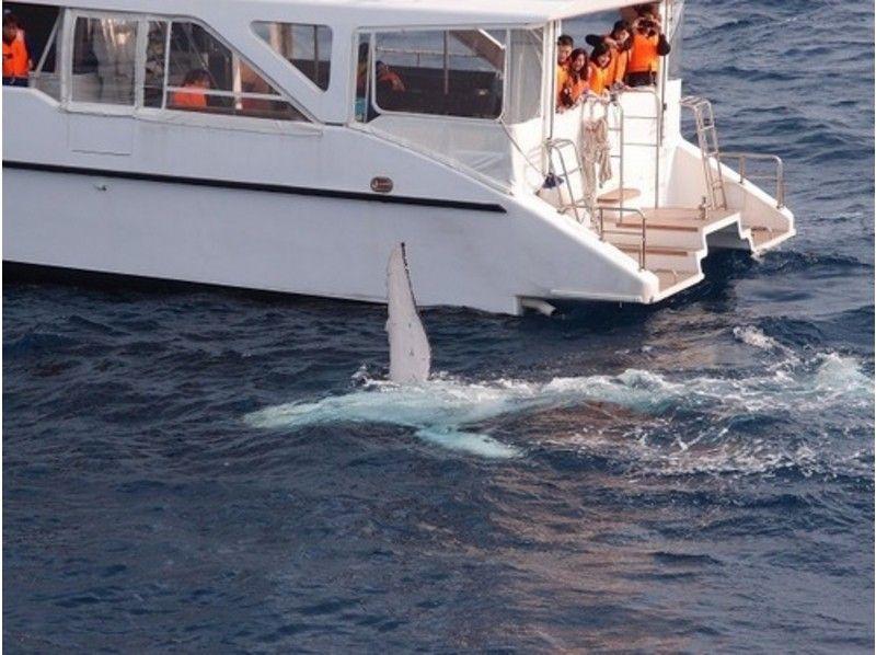 【沖縄・初心者向け】近くで迫力あるザトウクジラを見よう!ホエールウォッチング(半日コース)の紹介画像