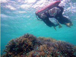 レインボーリーフ (Rainbow Reef)の画像