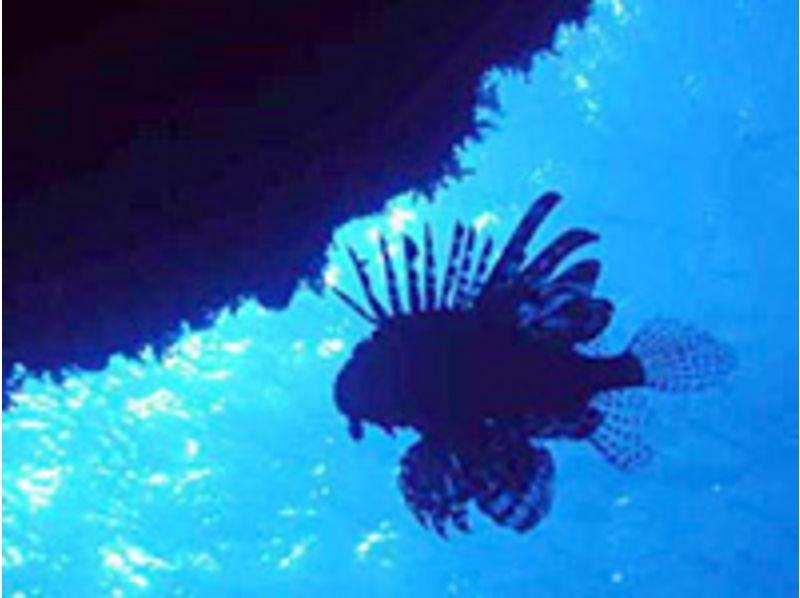 【東京都・八丈島】青く透明な世界を見てみませんか?【ファンダイビング・2ビーチダイブ】の紹介画像