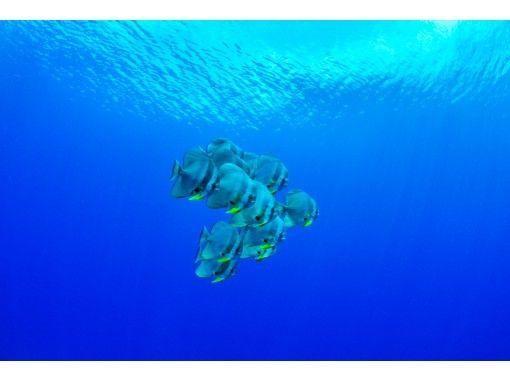 【沖縄・真栄田岬】青の洞窟シュノーケル&美ら海体験ダイビングSET★キレイなショップの充実施設に大満足(写真・動画撮影サービス付)の紹介画像