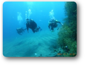 ダイビングスクールビッグフィンの画像