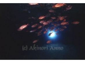Diving&Photo Studio ViaMareの画像