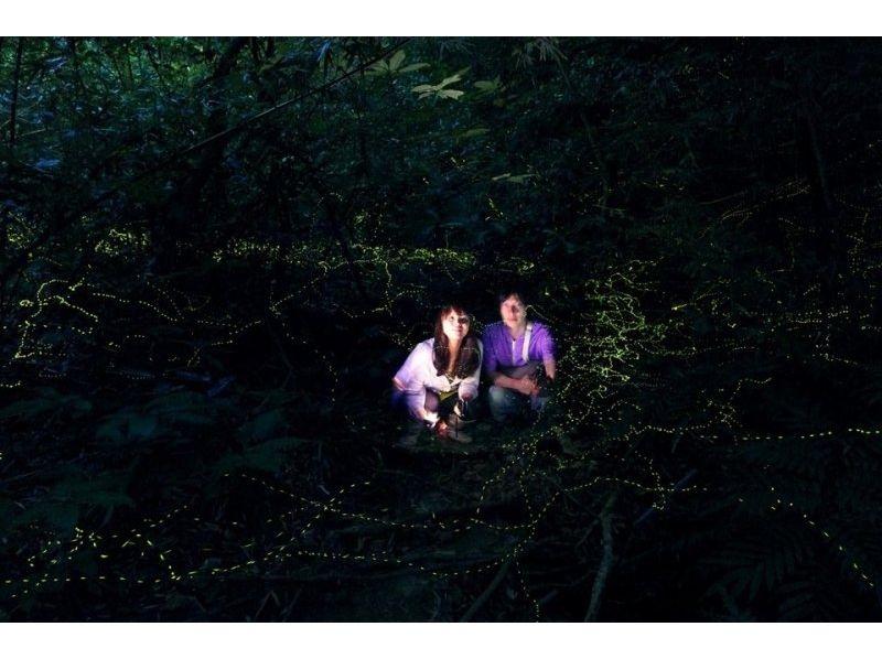 【沖縄・西表島】おもしろ夜間生物観察 ナイトツアー【トレッキング】の紹介画像