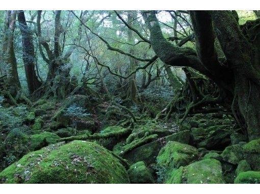 【鹿児島・屋久島】トレッキング白谷雲水峡日帰りコース(楠川歩道コース)