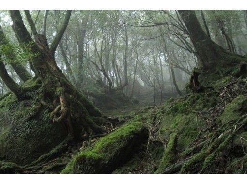 【鹿児島・屋久島】トレッキング白谷雲水峡日帰りコース(半日コース)