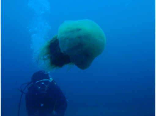 [Shimane Ota] peace of mind even beginners and safety experience diving [3 hours]の紹介画像