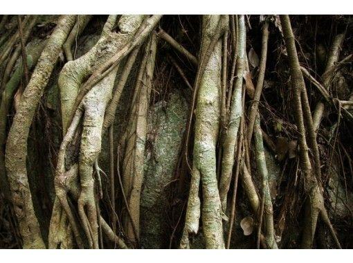 【鹿児島・屋久島】感性を研ぎ澄ます1日トレッキング「スケッチツアー」屋久島の自然を絵描こう