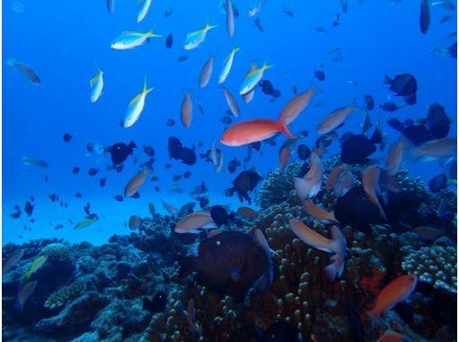 【栃木県・小山市】ライセンス不要! 海で体験ダイビングの紹介画像
