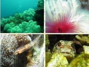 ダイビング倶楽部 g-scubaの画像