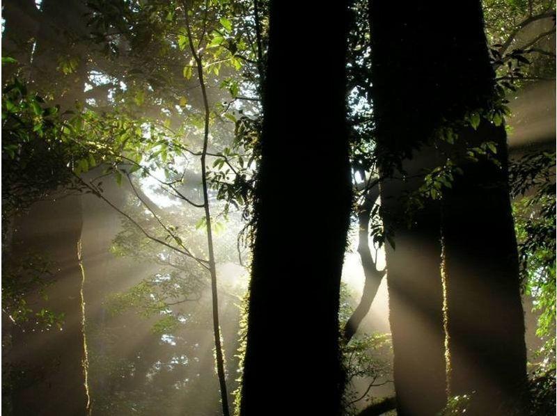 【鹿児島・屋久島】ビギナーにおすすめ!『ヤクスギランドコース』(半日、1日コース)の紹介画像
