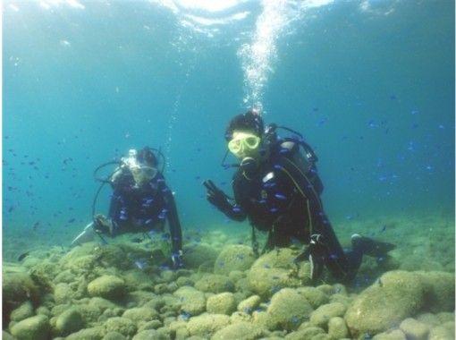 【静岡・伊豆/沼津】魚の群れの中で泳げます/体験ダイビング